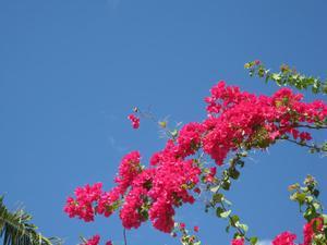 Flower6_2